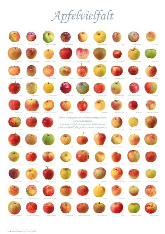 Poster Apflevielfalt
